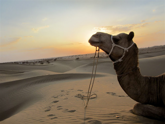 Best places to visit in Rajasthan, Camel safari jaisalmer